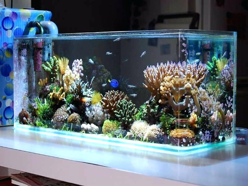 Planted aquariums, all you need to know