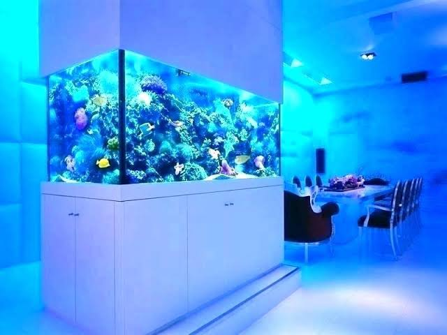 The decoration of the aquarium: the background